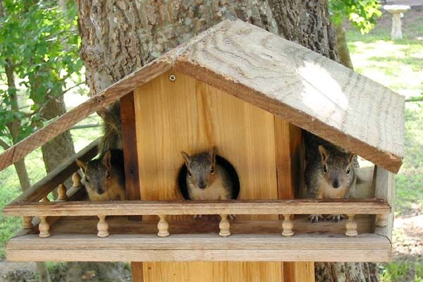 free plans tree house built from wood pallets  | Free Plans Build a Squirrel House in Less Than One Hour Protect ...