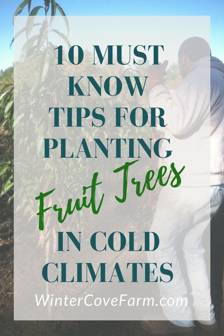 best 25 cold climate gardening ideas on pinterest winter