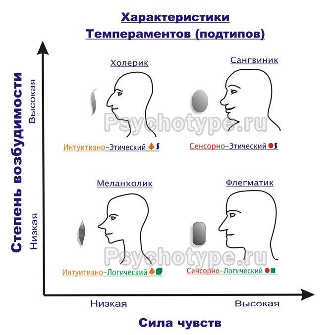 harakteristiki_temperamentov