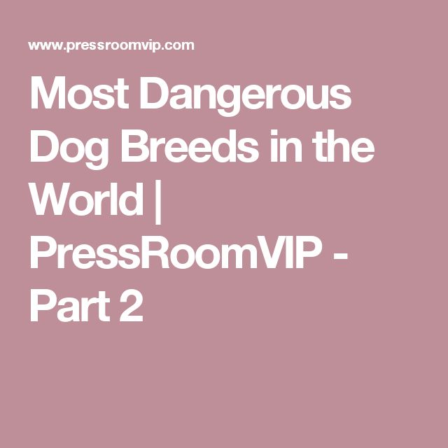 Most Dangerous Dog Breeds in the World | PressRoomVIP - Part 2