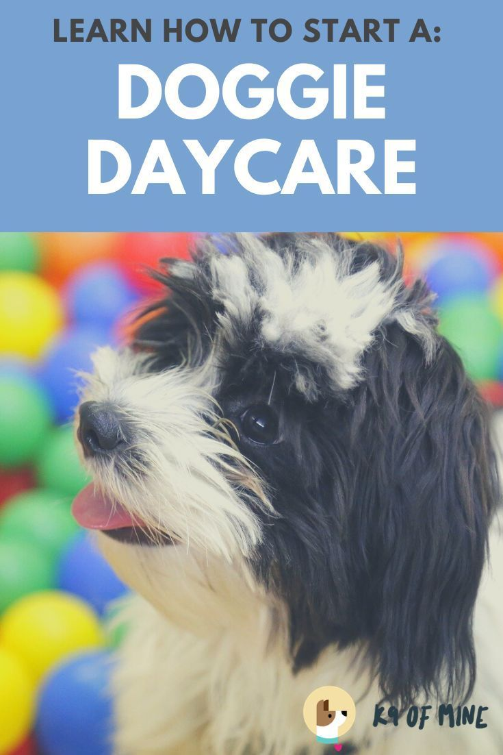 Popular Dog Accessories Thinking About Opening A Doggie Daycare