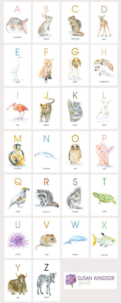 "Animal Alphabet Flash Card Set - 4""x6"" full color watercolor illustrations on each card. Prints of my original watercolor paintings. Each letter in the English alphabet is represented by a sweet littl"