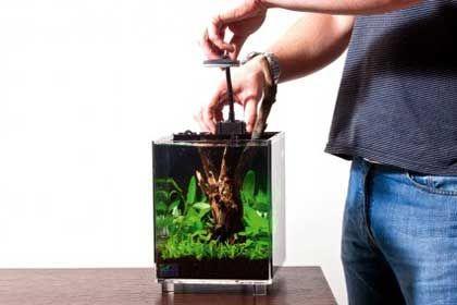 filtro acquario come posizionarlo con i betta splendens