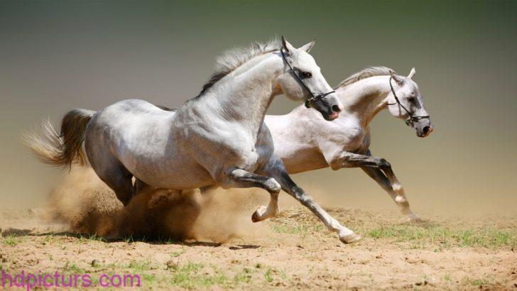 صور حيوانات 2018 خلفيات حيوانات جميلة وصور اجمل الحيوانات Horse Wallpaper Horses Beautiful Horses
