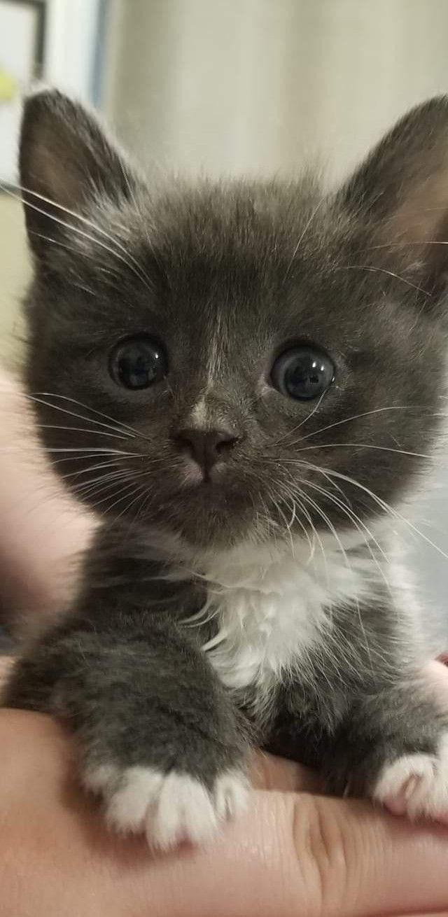 Cucciolo A Little Mini Kitten Cucciolo Kitten Little In 2020 Cute Fluffy Kittens Cute Cats Kittens Cutest