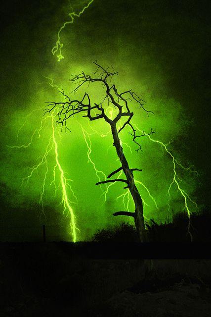 Green With Envy 8 dead tree in fire scarred high ridges of NW Nebraska.