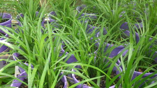 photos jasmine garden marcos