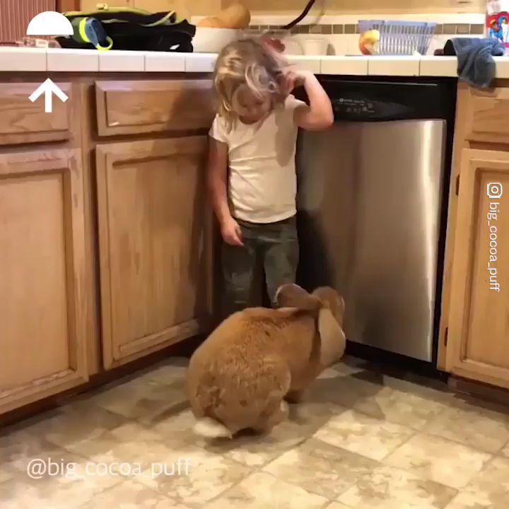 My large rabbit pet