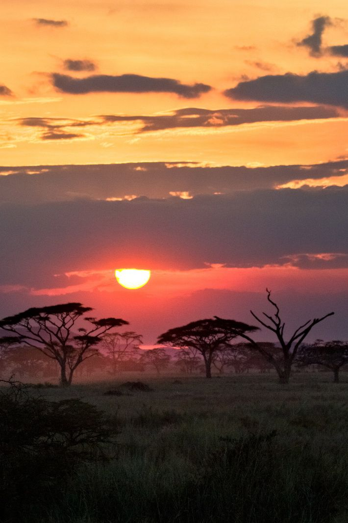 """Serengeti safari, Tanzania - with a view like this, it won't take me long to start singing """"circle of life"""""""