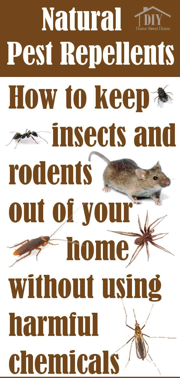 Do you have a pest infestation? When insect and rodents invade your home it's time to fight back. Living in the countryI've had t...