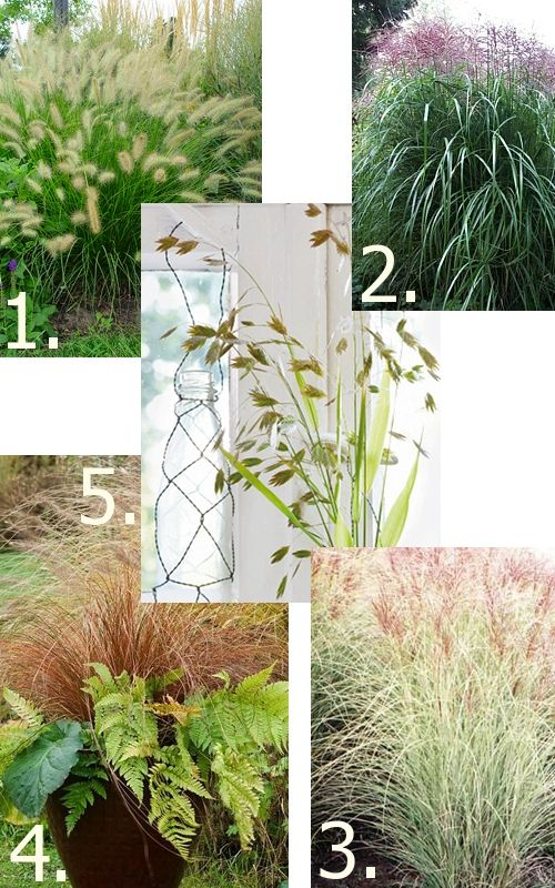 5 Lovely Grasses For The Garden. For Our Barren Front Yard. Iu0027m Thinking  Sea Of Grasses!