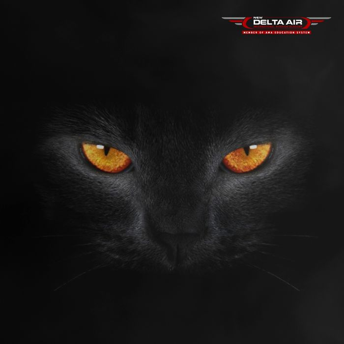 Did you know that... The Egyptian goddess, Bast, was thought to take the form of a black cat. So many ancient Egyptians owned black cats as a way to court her favor. #HalloweenThursdayTriva #AMAThrillerThursday