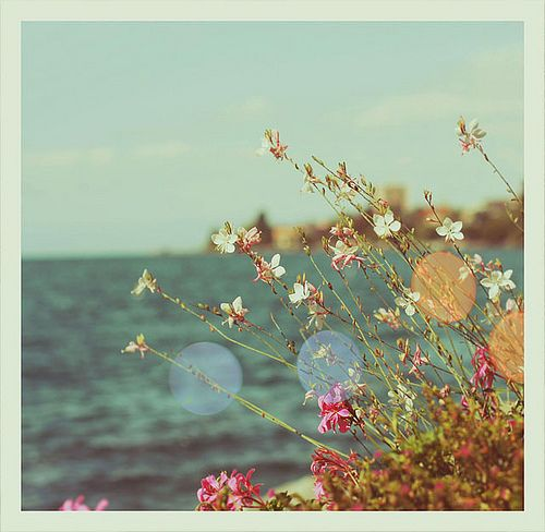 Wild flowers by the sea!