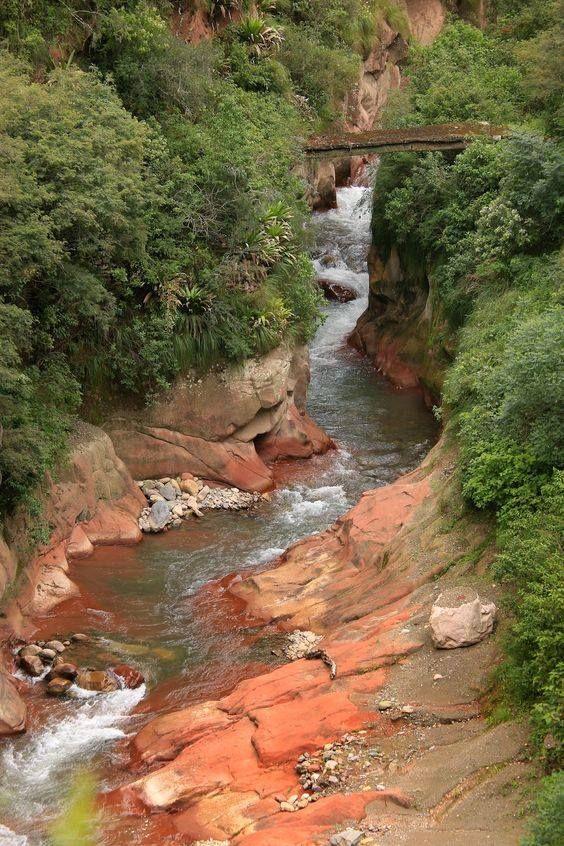 El parque nacional Calilegua es un área protegida situada sobre las faldas orientales de las serranías de Calilegua, en el sudeste de la provincia de Jujuy en el noroeste de la República Argentina.