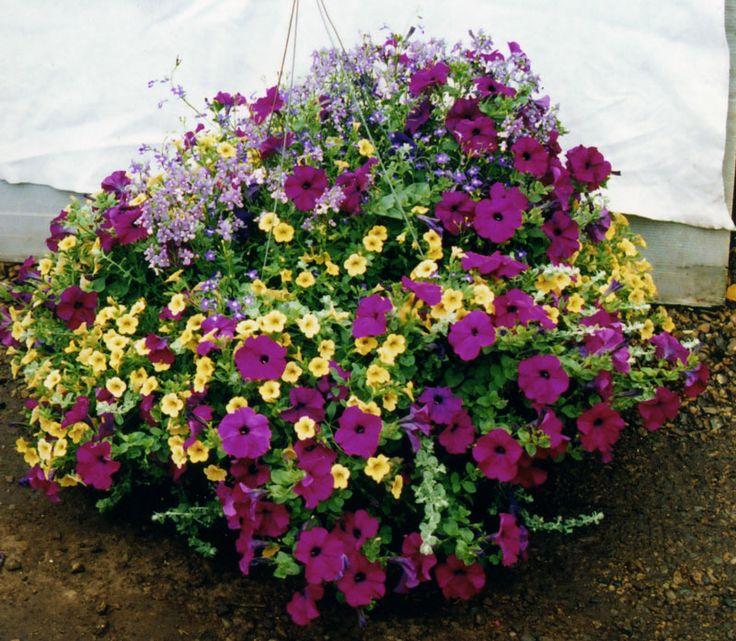Hanging Flower Baskets   Planters & Hanging Baskets