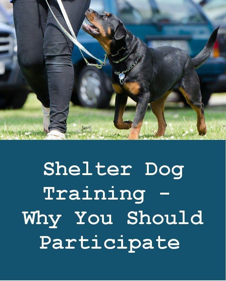 Shelter Dog Training Why You Should Participate Dog Training