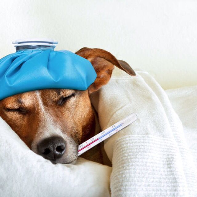 Pet Poison Prevention Week  Tip #4: Almost 7% of all pet poisonings are from mouse and rat poisons that can cause uncontrolled bleeding, seizures and kidney failure.  If your pet gets poisoned call the Pet Poison Hotline at 1-855-764-7661.  #KeepYourPetSafe #HealthyPets #instapet