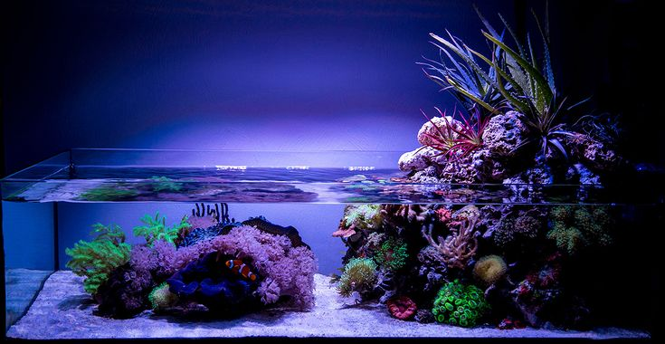 Wawawang - 2015 Featured Aquariums - Featured Aquariums - Monthly Featured Nano Reef Aquarium Profiles - Nano-Reef.com Forums