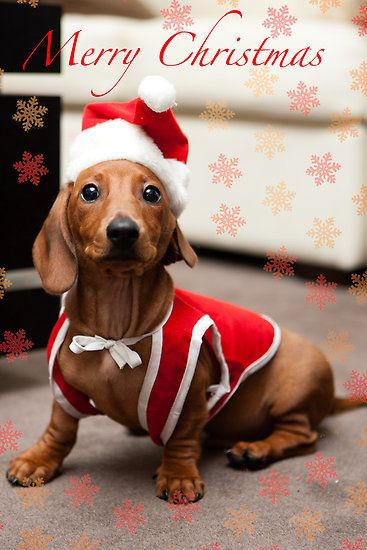Christmas Dachshund Dog Merry Christmas Card Puppy Holiday Dogs Santa Claus Dog Puppies Xmas