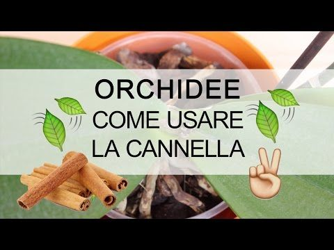 Orchidee - Come usare la cannella - YouTube