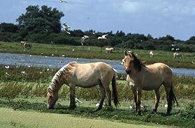 Baie de Somme les chevaux de henson