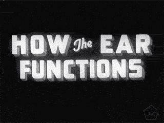 okkultmotionpictures:  EXCERPTS >|< How the ear functions (1940)    | Hosted at: Internet Archive   | From: Prelinger Archives   | Download: Ogg | 512Kb MPEG4 | MPEG2   | Digital Copy: Public Domain  The video outlines structure and function of the human ear; sound waves are briefly explained; animation reveals function of tympanic membrane and ossicles of ear bones and other parts of the ear. Shows the transmission of sound waves by the tympanic membrane and the ossicles to the oval window…