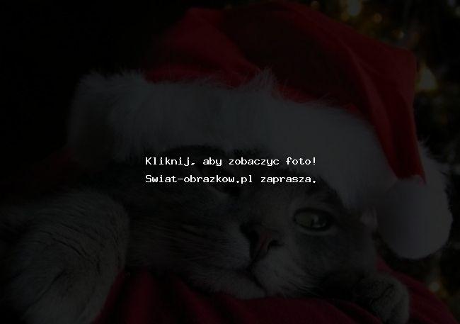 Kotek w przebraniu mikołaja Boże Narodzenie święta świąteczne obrazki