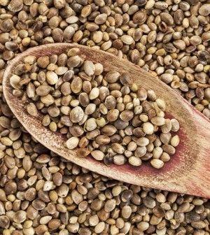 Il potere curativo ed energetico racchiuso nei semi di canapa