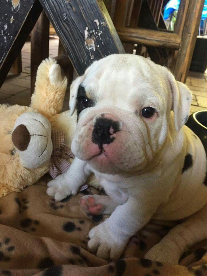 That Scrunchy Little Face Super Cute Animals Cute Animal
