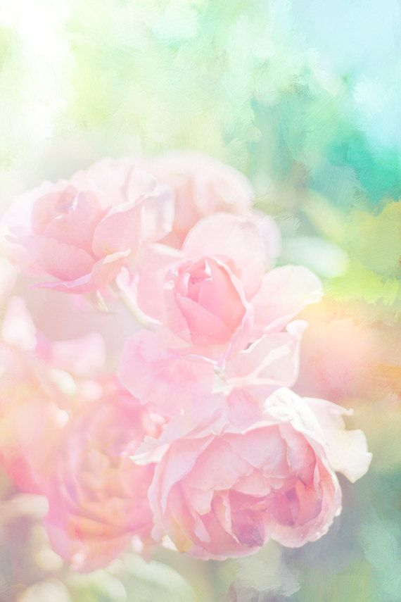 Pink Roses Photo Pastel Flower Digital Download Nursery