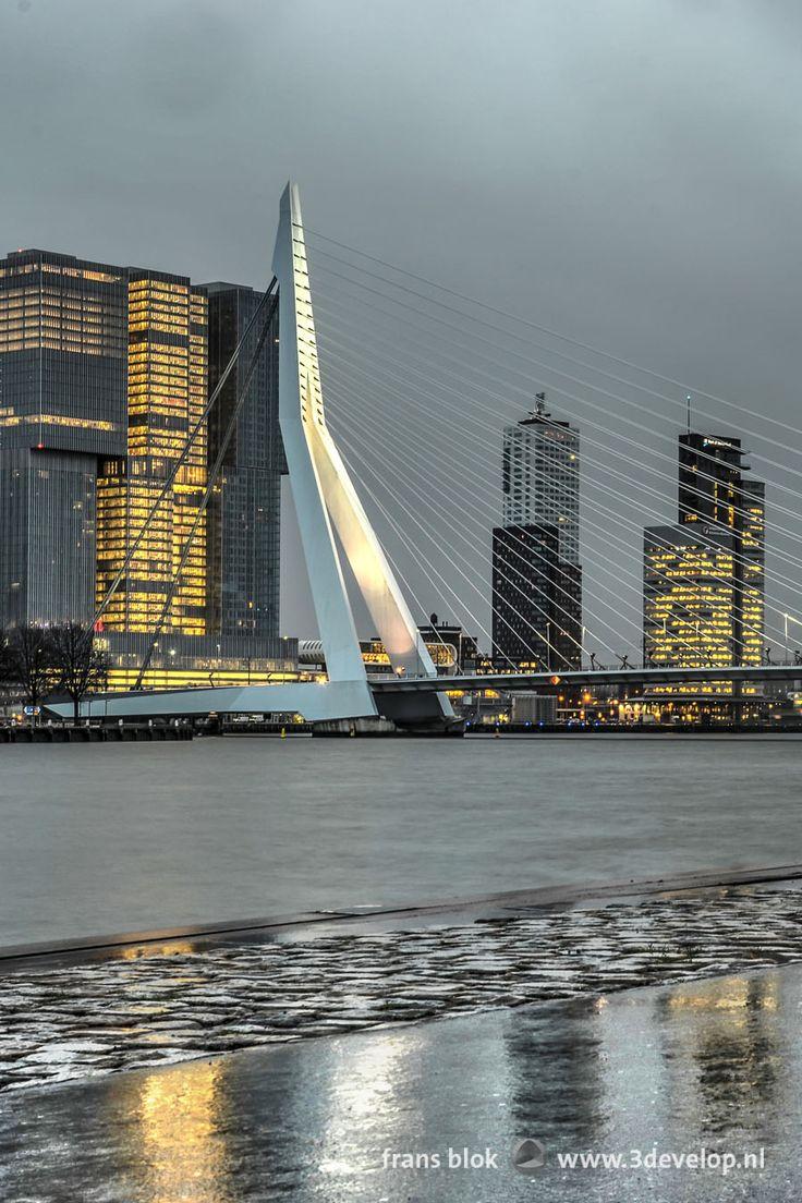 Erasmus Bridge reflecting in the wet asphalt on Boompjes Quay, Rotterdam - De Erasmusbrug weerspiegelend in het natte asfalt op de kade bij de Boompjes in Rotterdam.