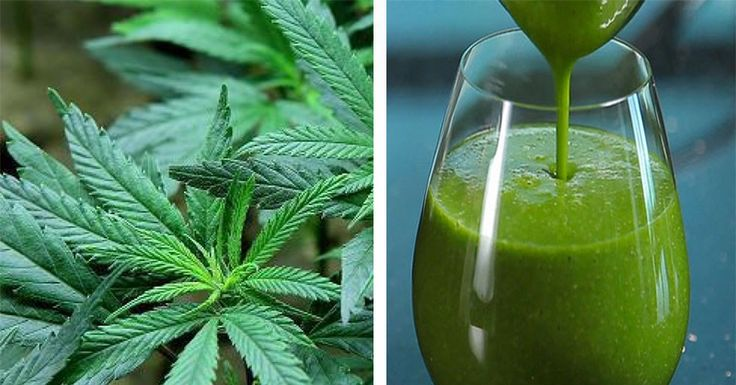 4 Surprising Health Benefits of Juicing Raw Marijuana | Healthy Living Style