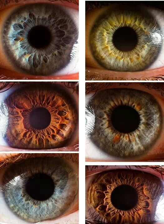 Ocular Anatomy Coloring Book : 31 best eye colors beautiful eyes images on pinterest