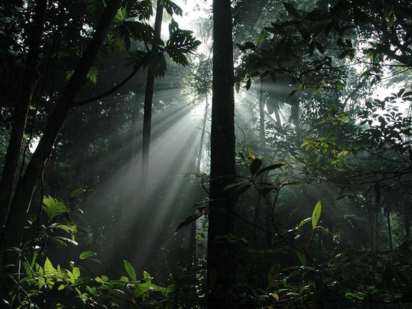 Shot of light streaming through the rainforestNature Form, Lights Stream, Beautiful Places, Places I D, Rain Forests, Indonesian Rainforests, Lights Shinee, Photography