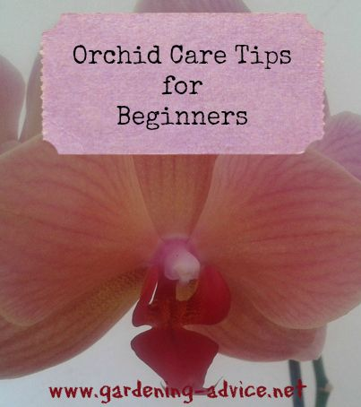 beginners guide to orchids Orchard beginner is created with the aim to provide users and developers to have a beginner's guide to learn the ins and outs of orchard we begin with the basics of orchard ie talking about basic site management, user management and then we step into more important features of orchard like queries, projector, taxonomies, custom forms.