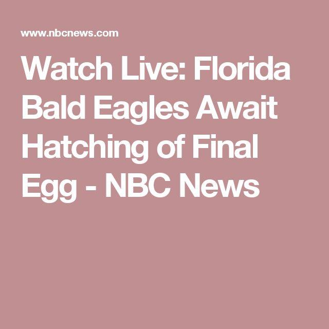 Watch Live:  Florida Bald Eagles Await Hatching of Final Egg - NBC News