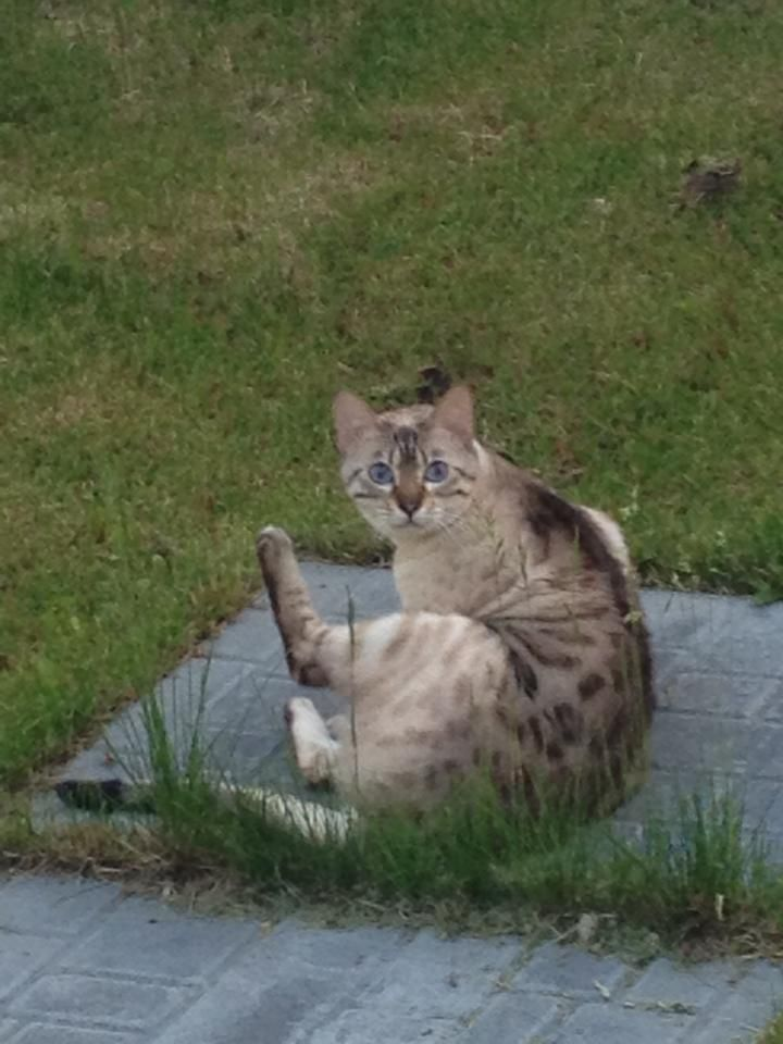 Rebecca Ann ConwayFort Mcmurray lost Cats & Dogs June 23 via mobile near Fort McMurray, Alberta   Anybody missing a cat? This one has been in our yard past couple evenings!! If so let me know. Feel free to share  very cute cat!!! Timberlea area!