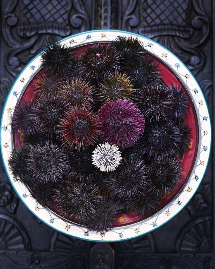 Spaghetti con Ricci di Mare, spaghetti with sea urchins
