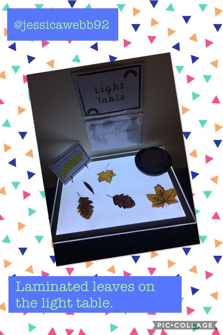Laminated leaves on the light table.