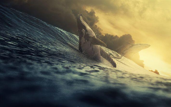 Lataa kuva 4k, valaat, aallot, ocean, sunset, wildlife