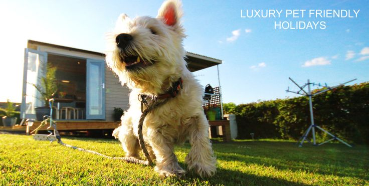 Dog friendly holidays Wales in our Shepherd Huts