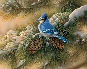 December Dawn-Bluejay by Rosemary Millette WildWings