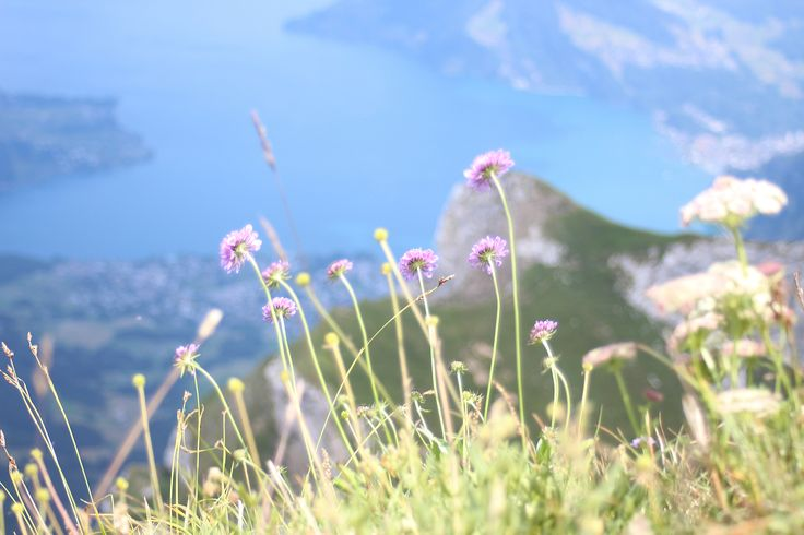 The Alps is one of our favorite places to visit. Summer and wintertime are both amazing when the view is something like this. This pic is from Mount Pilatus where our trainee Sarianne hiked last summer.