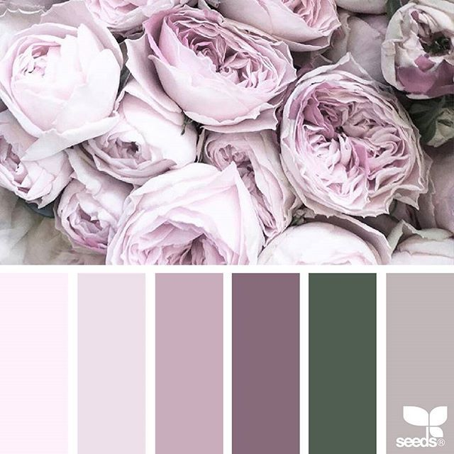 today's inspiration image for { flora tones } is by @abbymatses ... thank you, Abby, for sharing your gorgeous photo in #SeedsColor !