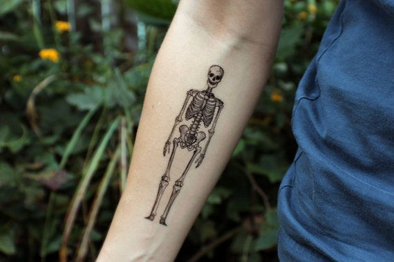 Best 25 human skeleton ideas on pinterest anatomy bones for Removal of temporary tattoos