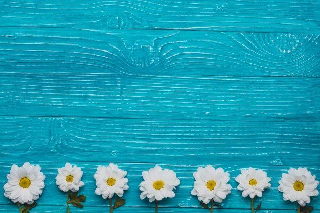 Fundo de madeira azul com margaridas na fileira Foto gratuita