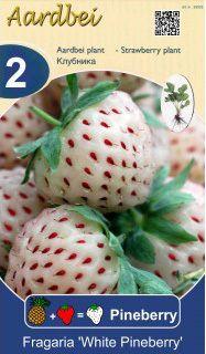 Pineberry (fresa con sabor a piña) en bolsa para plantar (2 unidades) - Garden center venta online. Comprar plantas online, bonsais, mesas huerto urbano, rosales, árboles