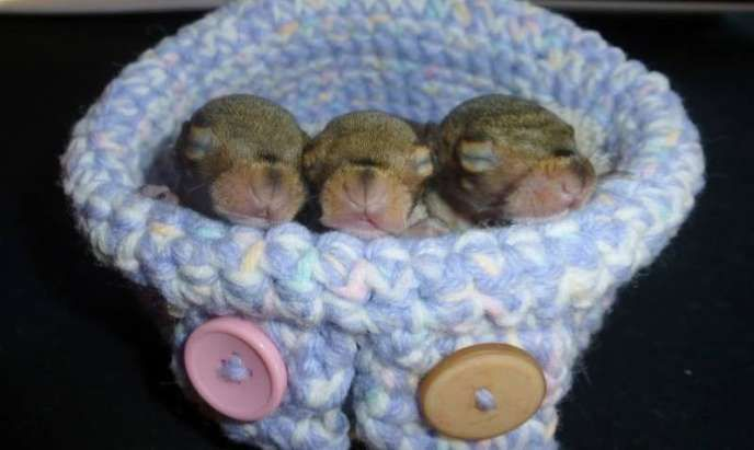 Crocheting For A Cause : Crocheting For A Cause: Volunteers Create Tiny Nests For Orphaned ...