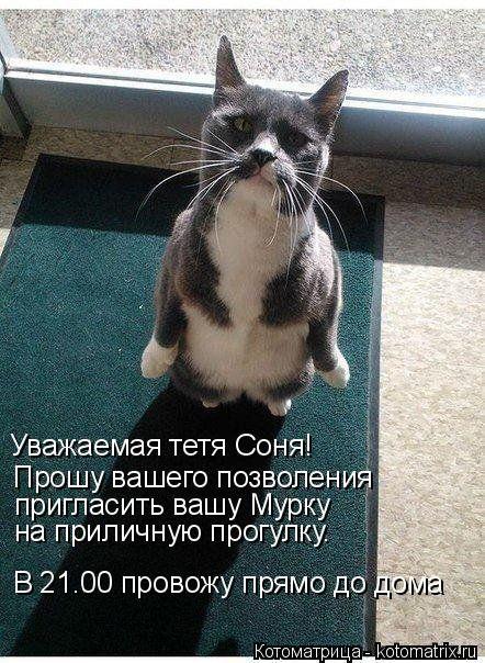 Новая отличная котоматрица (37 фото)
