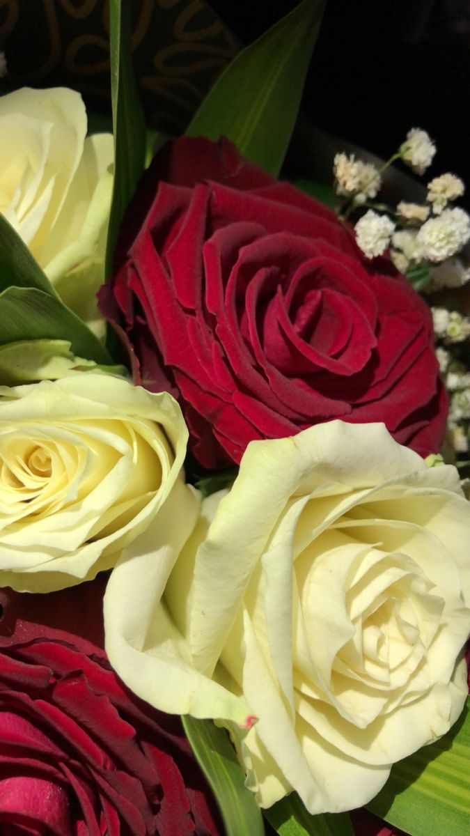 ورد تصويري سناب Flowers Rose Plants